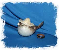 Рыба Попугай в шляпе 8 - 9 см.