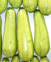Амджад F1 семена кабачка, (Seminis / Семинис)