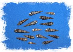 Ракушки морские для рукоделия