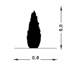 Можжевельник скальный Скайрокет