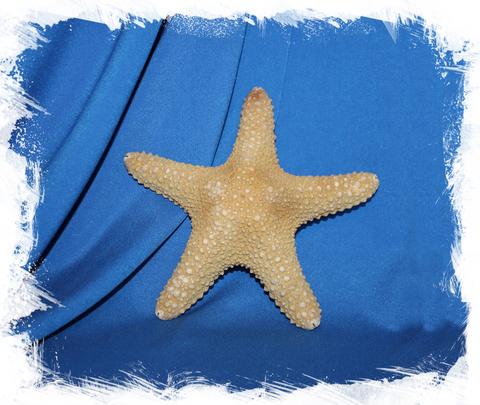 Натуральная морская звезда для декора