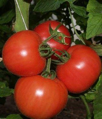 Томат Пинк Уникум F1 семена томата индетерм.., (Seminis / Семинис) ПИНК_УНИКУМ_F1__Pink_Unicum_F1__семена_овощей_оптом.JPG