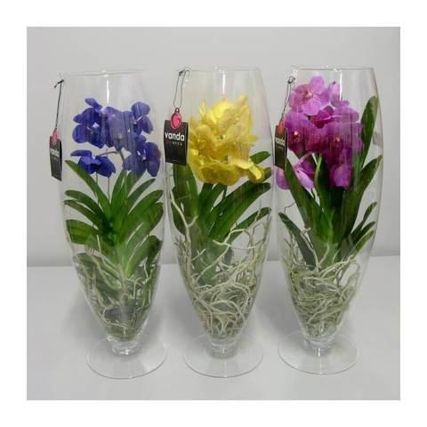 Цветы купить в москве орхидеи заказать доставку цветов по москве недорого