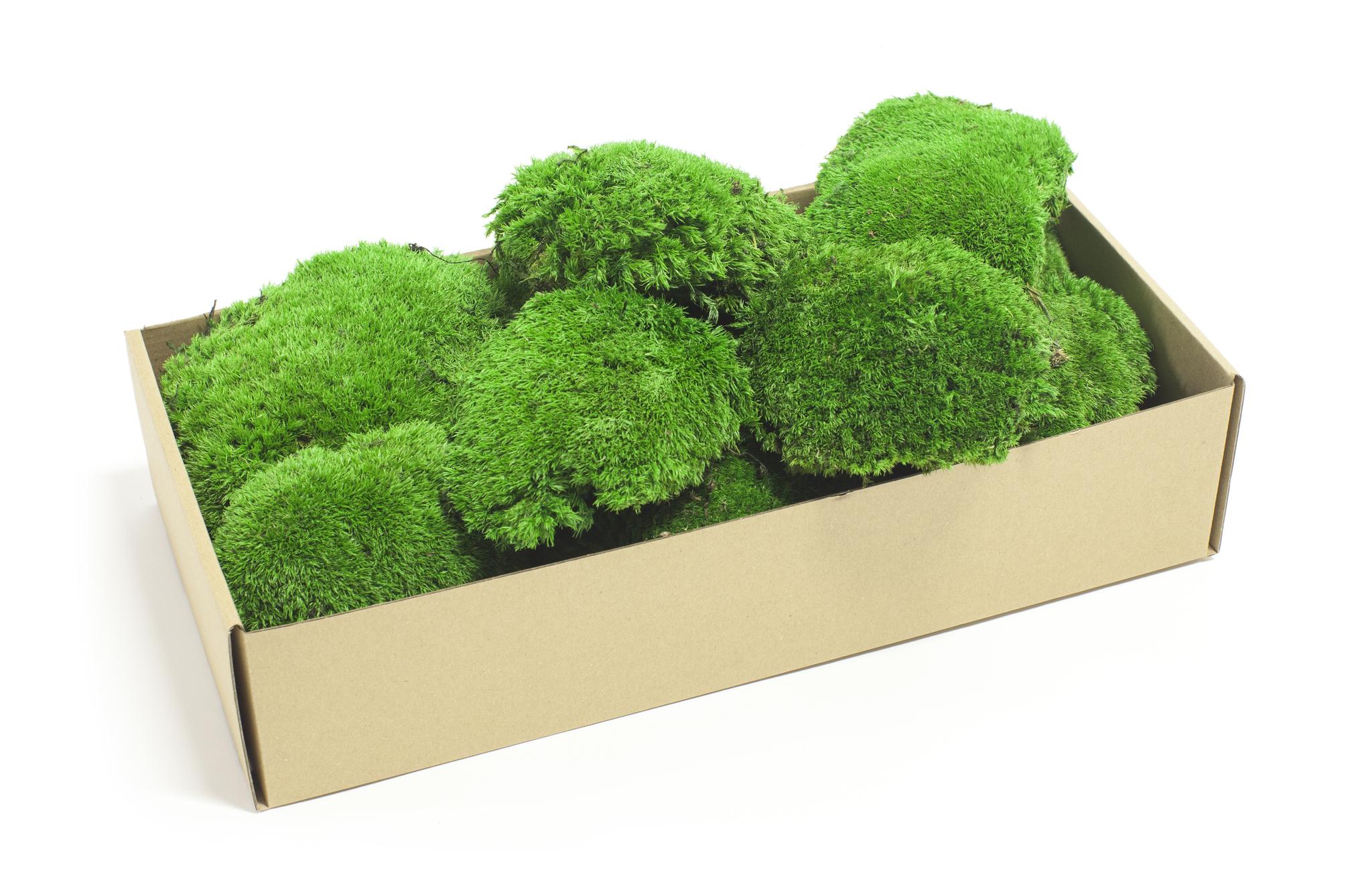 стабилизированный мох кочками в коробке