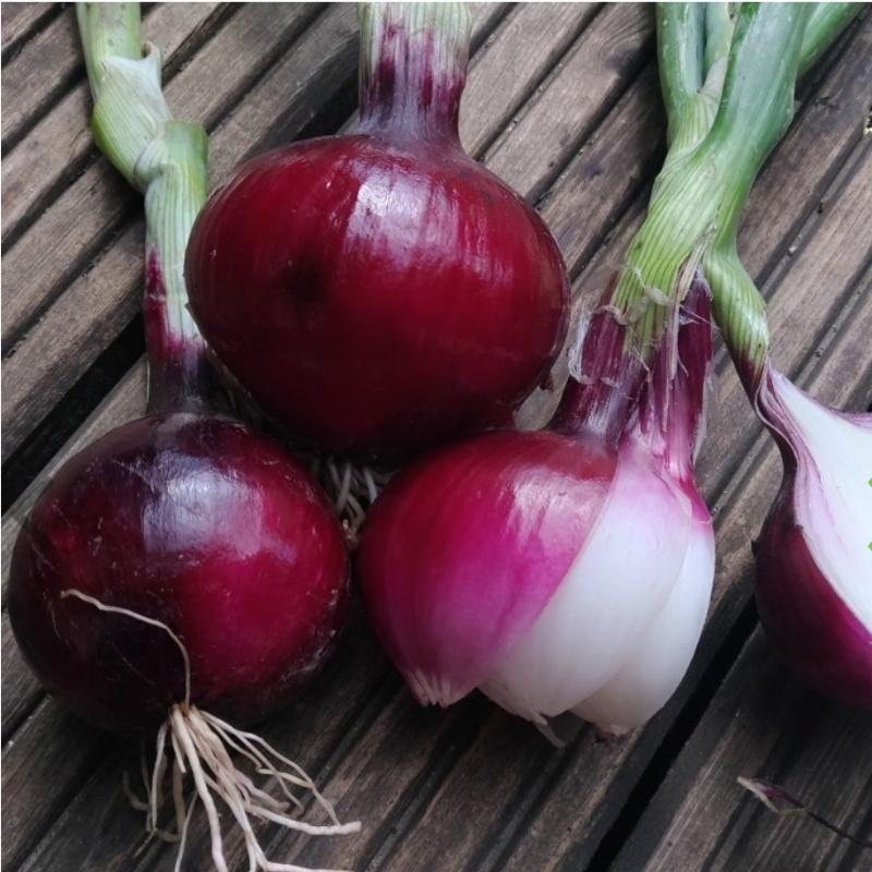 Фотография Лук красный сладкий салатный (0,5 кг) купить в магазине Афлора
