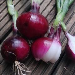 Лук красный сладкий салатный (0,5 кг)