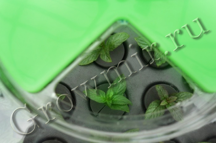 GrowPlant 40 Site
