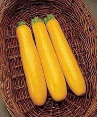Голд Раш F1 семена кабачка, (Seminis / Семинис)