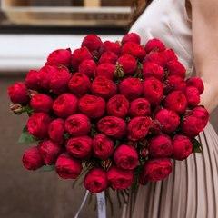 51 красная пионовидная роза 50 см