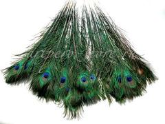 Перья павлина  декоративные ,  01 натуральный (длина около 25 см.)