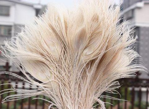 Перья павлина  декоративные , кремовый (ок. 20 см.)