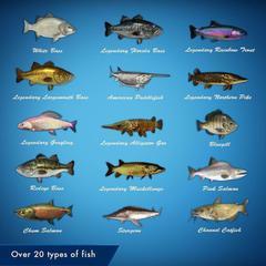 NS: Legendary Fishing (английская версия)