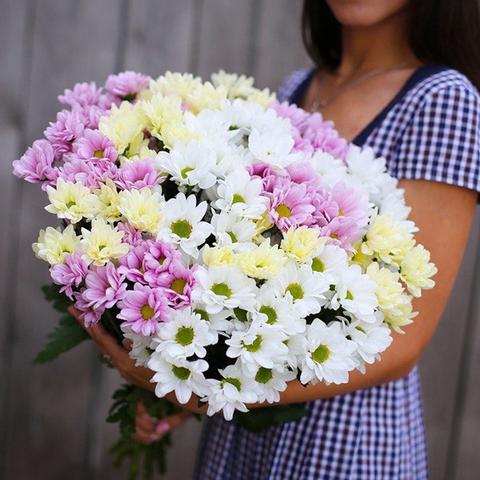 Хризантемы кустовые микс от 3шт