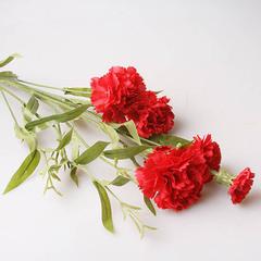 Гвоздика кустовая 9140, red