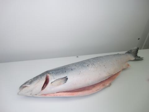 Лосось атлантический потрошеный  свежемороженый 4-6кг Чили (кг)