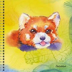Красная панда (акварель)