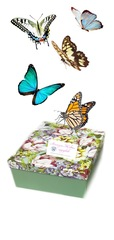 Салют из 5 бабочек