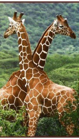 Настенный обогреватель Жирафы