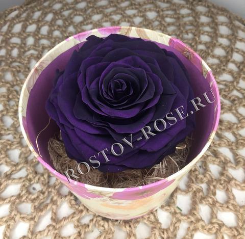 Розы стабилизированные - композиция Неувядающая красота