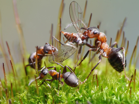 Корм белковый для муравьев