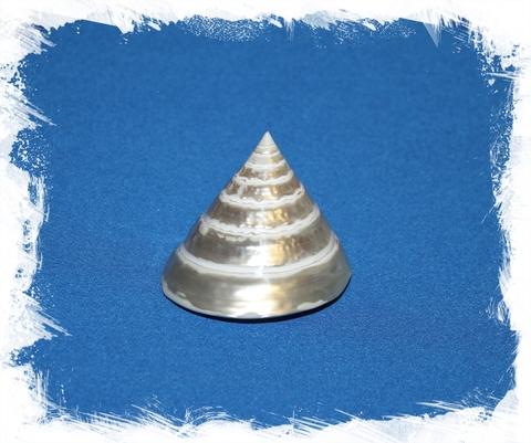 Трохус Пирамис Перламутровый 6 см.