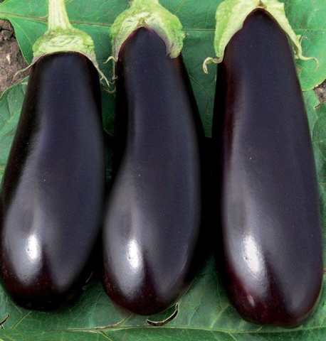 Семена Баклажан Эпик (Semenis) 10 сем