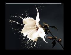 """Постер """"Молочный цветок"""""""