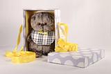 Кот Басик Baby в клетчатом слюнявчике