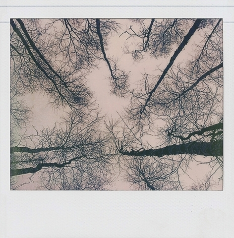 Trees & Sky (Kevin Dean)