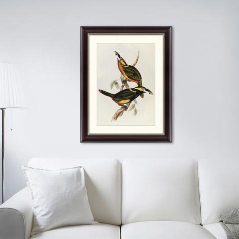 Джон Гульд - Экзотические виды птиц, литография, 1838г