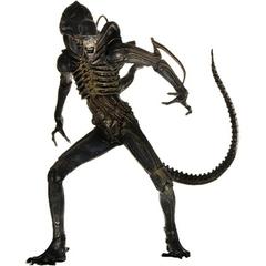 Aliens Warrior