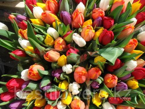 Тюльпаны (Любых цветов, Местные)