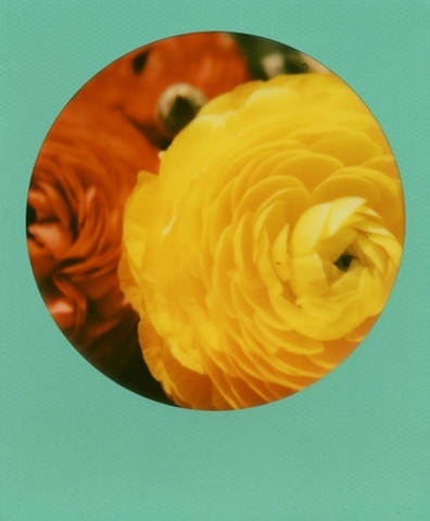 Spring Colors (Joep Polaroid Photograhpy)
