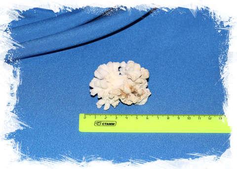 Ветка коралла малая № 1