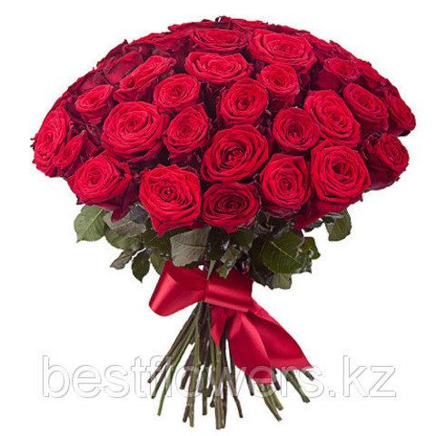 Букет из 51 розы (Рэд Наоми 60 см)