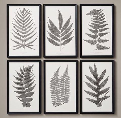 1859 English Fern Print Collection - White