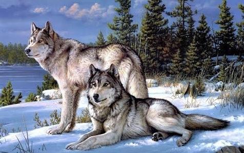 Картина раскраска по номерам 30x40 Волки зимой– купить в ...