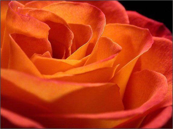 Оранжевый, неоновый пигмент 12 мл
