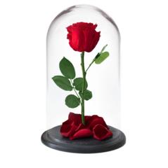 Роза в колбе (вечная роза)