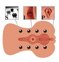 Мастурбатор вагина анус реалистик KOKOS ADARASHI-3