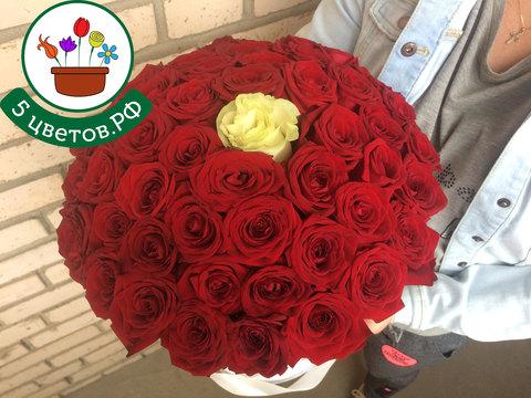 Букет 50 красных и 1 белая роза в коробке