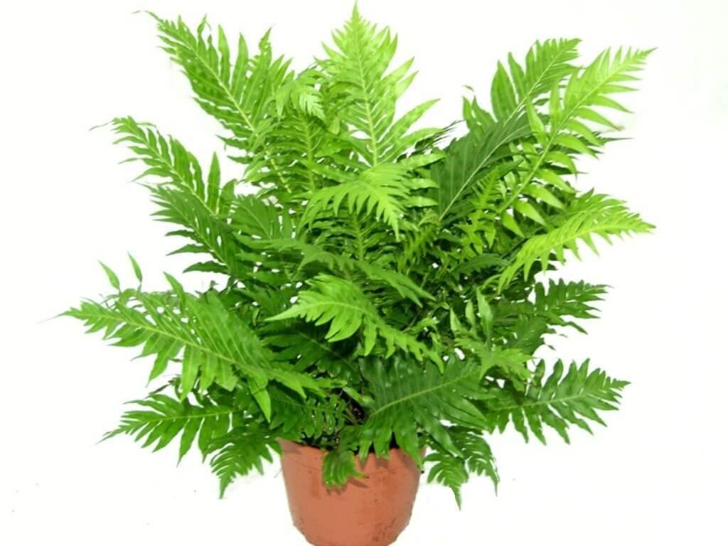 Комнатные растения - Nicole.kz
