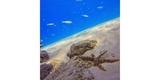 Набор фильтров PolarPro Aqua 3-Pack HERO 5/6/7 Black пример фото