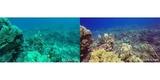Набор фильтров PolarPro Aqua 3-Pack HERO 5/6/7 Black фото сравнение