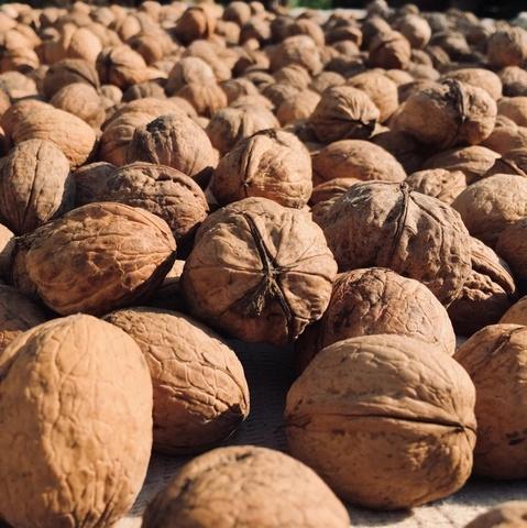 Фотография Грецкий орех в скорлупе /Краснодар/, 1 кг. купить в магазине Афлора