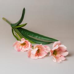 Букет лилий болотных, розовый, 29291
