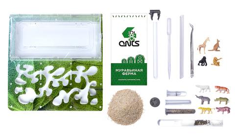 Antrum XL зеленый + муравьи Camponotus parius