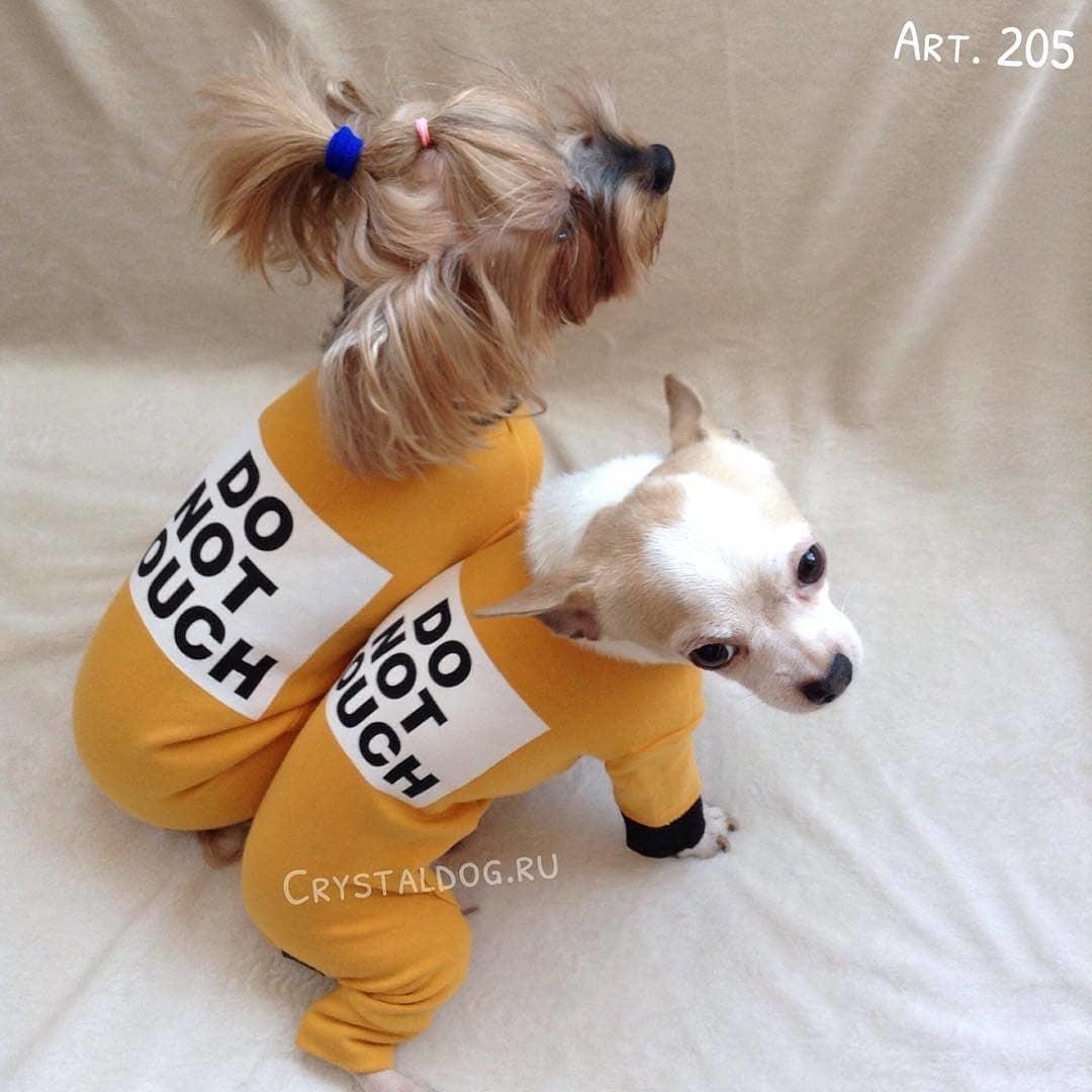 Костюмы для собак puppyangel фото