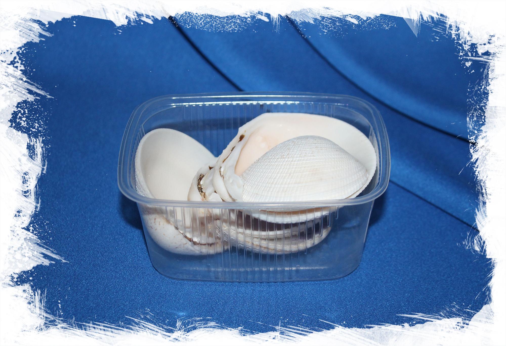 Морские ракушки для рукоделия Антигона