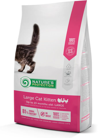 Large cat Kitten food for cats